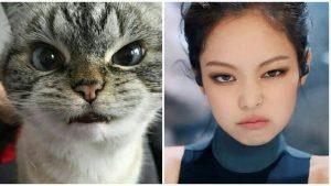 1000 Inspirasi Nama Kucing Indonesia Keren Untuk Peliharaan Kamu